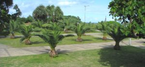arbres-élagage